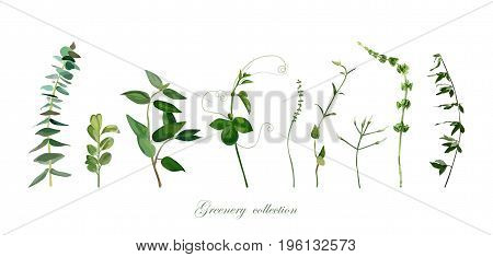 Branch twig set. Eucalyptus boxwood thyme bells of ireland different foliage natural herb leaves elements in watercolor collection. Vector cute decorative beautiful cute elegant illustration design