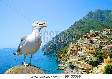 Seagull standing on stone in the background city Positano on Amalfi coast, Campania region, Italy.