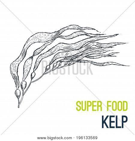 Kelp. Super food hand drawn sketch vector illustration.