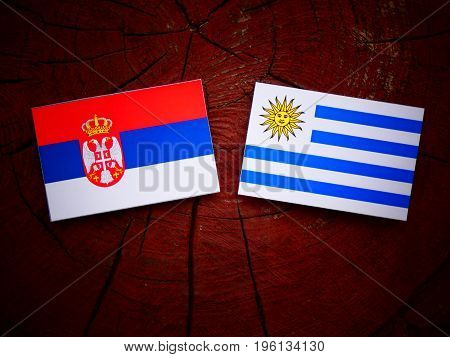 Serbian Flag With Uruguaian Flag On A Tree Stump Isolated