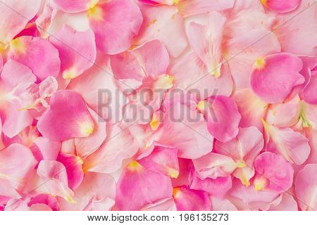 Pink rose petals Valentine's day background. Pattern of petals