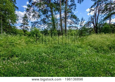 Sunny Meadow With Flowers And Green Grass. Low Vantage Point