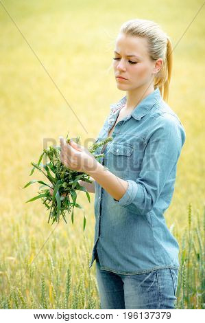 Pretty woman agronomist standing in wheat field with ears of wheat and carefully checks the crop