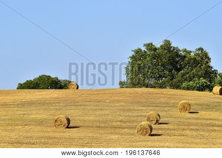 Stunning landscape with a harvested wheat field and rolled straw stacks against at sunset. Evora Alentejo Portugal