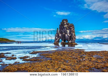 Hvitserkur - basalt rock in the form of an elephant on the beach. Northwest Iceland. The concept of extreme northern tourism