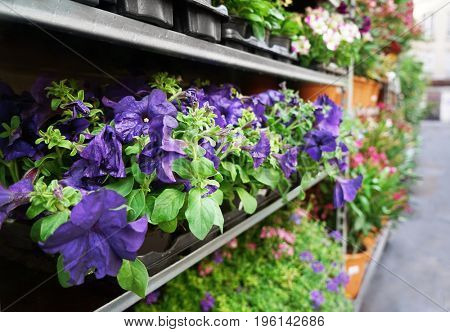 Different plants on shelves near store outdoor