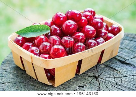 Delicious ripe cherries in a little wooden basket on textured wood background.