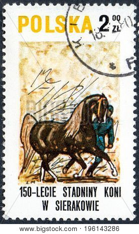 UKRAINE - CIRCA 2017: A postage stamp printed in Poland shows Demonstrating a horse from the series Sierakov Horse Stud Farm circa 1980