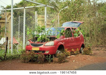 GOA India - March 01 2015: An abandoned red car with germinated plants under the hood