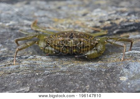 Crabs are crustaceans and are ocean dwellers.