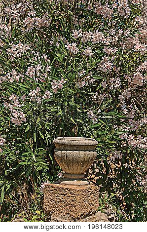 Close-up of stones and vase with shrubs and flowers, at the gorgeous medieval hamlet of Les Arcs-sur-Argens. Located in the Provence region, Var department, southeastern France. Retouched photo