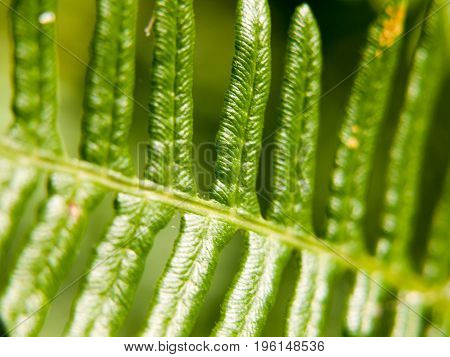 Close Up Pattern And Texture Of A Fern Leaf