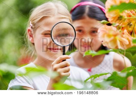 Children looking at flowers with curiosity using magnifying glass in nature