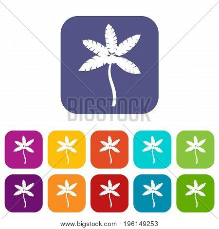 Palm tree with coconuts icons set vector illustration in flat style in colors red, blue, green, and other