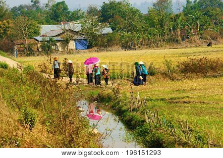 Beautiful scenery at Vietnamese countryside Dak Lak Viet Nam on day. Group of ethnic minority woman walk on country road near rice field and carry dossier shade of female reflect on water of river