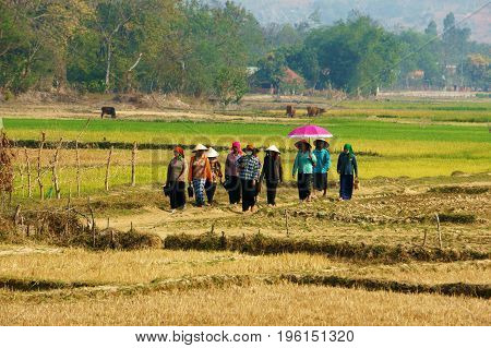 DAK LAK VIET NAM- FEB 8 2014: Beautiful scenery at Vietnamese countryside on day. Group of ethnic minority woman walk on country road near rice field and carry dossier at Vietnam