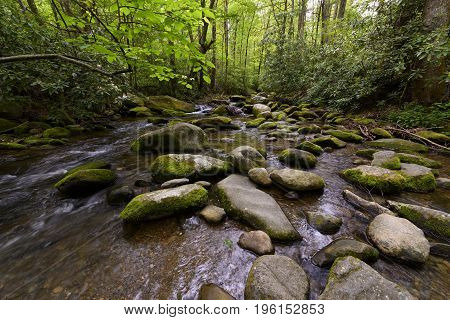 Rocky Stream in Smoky Mountains Forest in Smoky Mountains