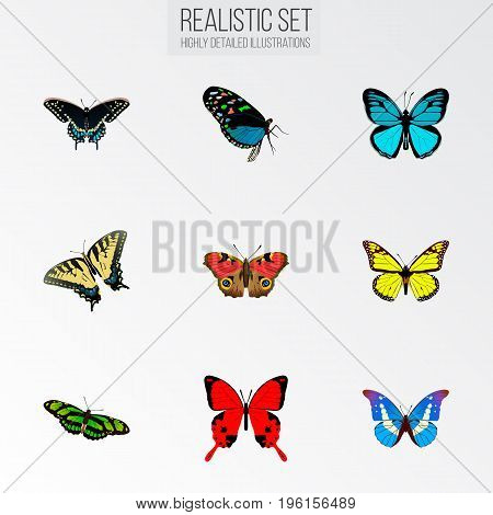 Realistic Sangaris, Morpho Hecuba, Checkerspot And Other Vector Elements