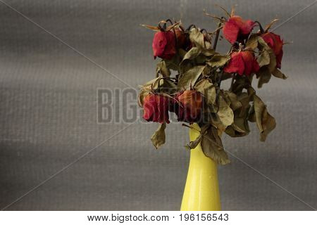 Wither died rose flower in yellow vase.