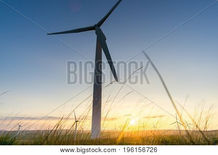 Wind turbine seen through the tall grass as the sunset in the back ground