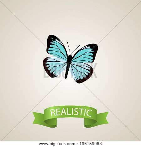 Realistic Demophoon Element. Vector Illustration Of Realistic Lexias Isolated On Clean Background