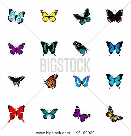 Realistic Milkweed, Sangaris, Common Blue And Other Vector Elements