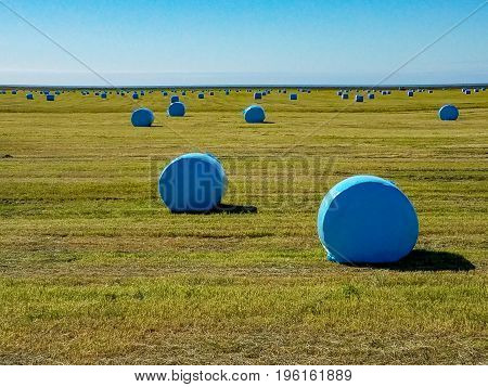 Bales of hay are in a field covered by blue plastic