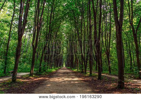 Foot path in a dense green forest