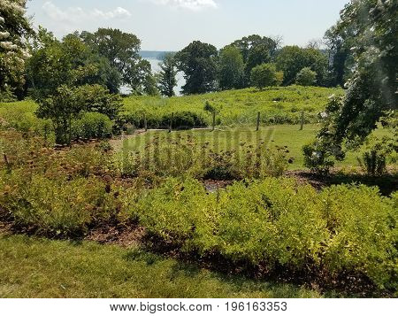 wildflowers and plants and a field overlooking a river