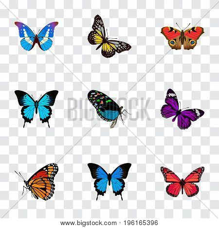 Realistic Summer Insect, Papilio Ulysses, Bluewing And Other Vector Elements