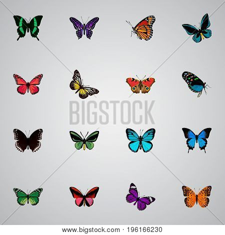 Realistic Milkweed, Beauty Fly, Polyommatus Icarus And Other Vector Elements