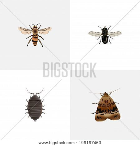 Realistic Midge, Butterfly, Wasp And Other Vector Elements
