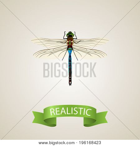 Realistic Dragonfly Element. Vector Illustration Of Realistic Damselfly Isolated On Clean Background