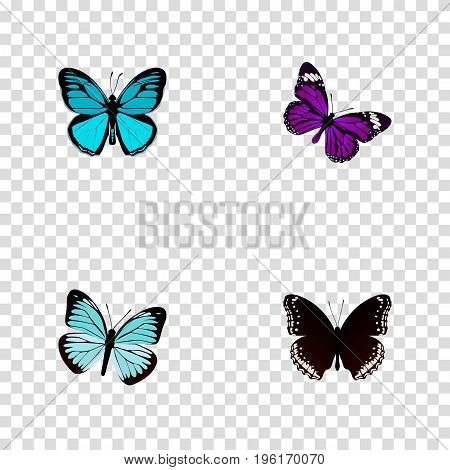 Realistic Butterfly, Spicebush, Sky Animal And Other Vector Elements