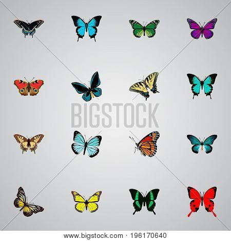 Realistic Milkweed, Purple Monarch, Checkerspot And Other Vector Elements