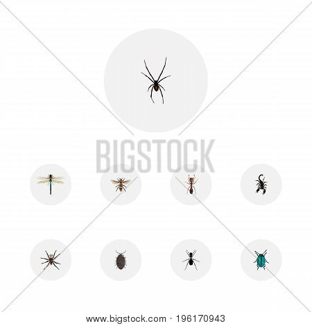 Realistic Spinner, Emmet, Poisonous And Other Vector Elements