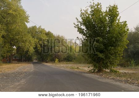 Road running across early fall trees of green and yellow colors. Landscape