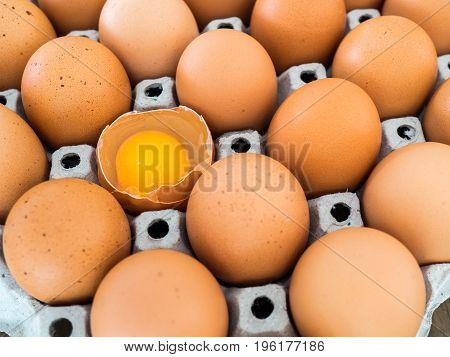 Close-up view of raw chicken egg. Every egg is a chicken egg and have one egg to crack.