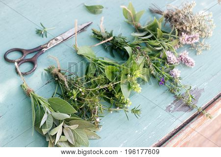 Different culinary fresh herbs on wooden background