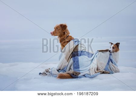 Two Dogs Sitting On The Ice