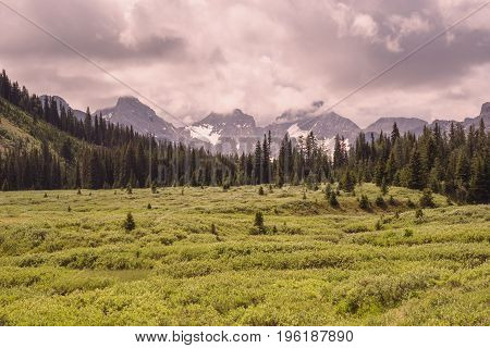 Landscape of a green meadow with a forest and mountain range in the foreground Kananaskis Alberta.