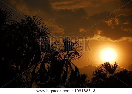 Palm trees seen in the backlight of a sunset