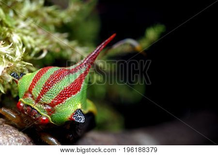 Colorful cicada at night in a branch