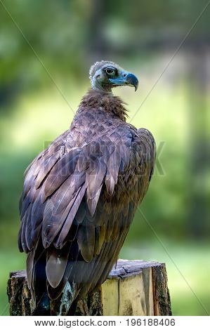 Image of a beautiful big bird animal griffin