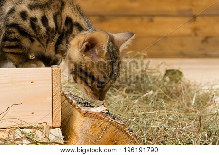 The kitten gets out of the box on the right there is a place for the inscription
