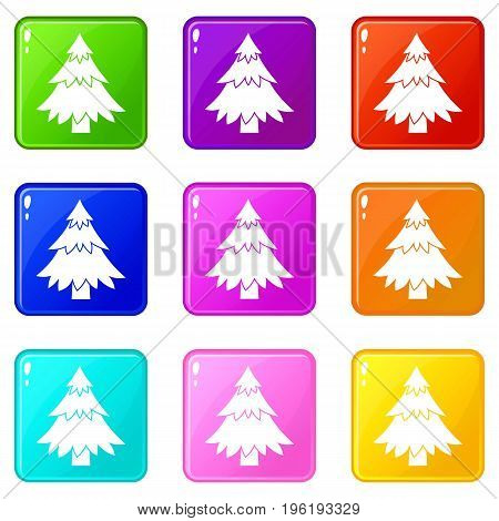 Coniferous tree icons of 9 color set isolated vector illustration