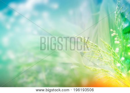 Blurred image of grass. Summer colorful abstract background. Lily of the valley