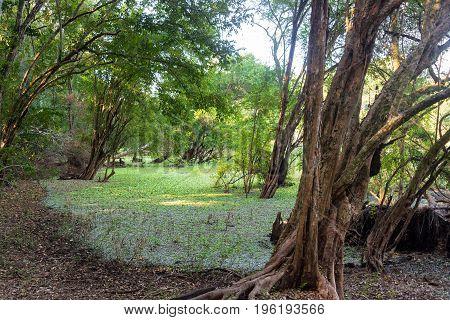 Wetland In Calakmul Biosphere