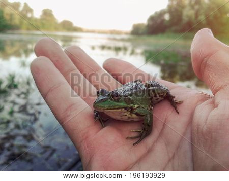 Little frog sitting on the hand. Boy holding frog in hand. Environment protection