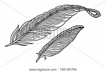 hand drawn vector feathers on white background